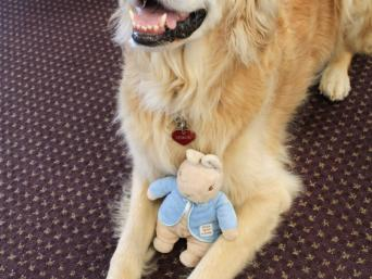 Desey the Reading Dog with a Stuffed Animal